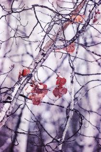 last ones by Priska  Wettstein