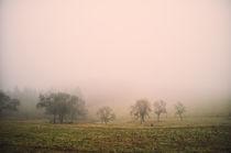 Obstbäume im Nebel by Jürgen Müngersdorf