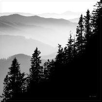 treescape von Chris R. Hasenbichler