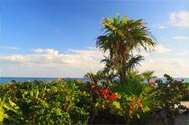 Naturstrand an der mexikanische Karibikküste von mellieha