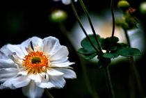 FALL FLOWERS von Maks Erlikh