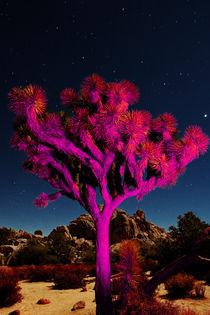 Joshua Tree 6133 von Zohar Lindenbaum