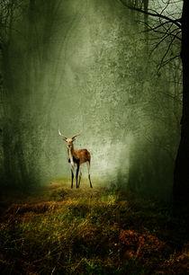 Deer by paula aguilera