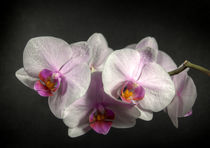Orchidee1-farbe-a3