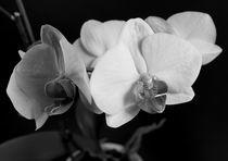 Orchideenzweig by Peggy Graßler