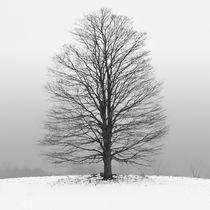 Hibernate by Sebastian Petrescu