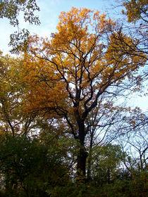 Baum im Herbst by Simone Cuambe