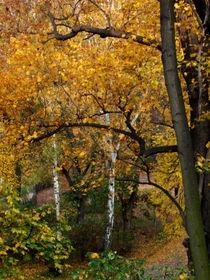 Herbst in Berlin,  Herbst,    ansicht von oben by Simone Cuambe