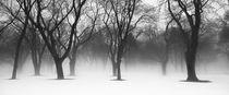 Forsale-winterfog