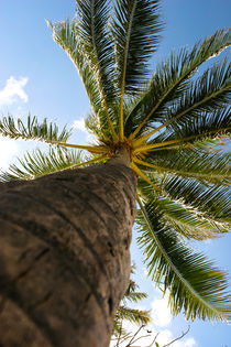 Palm Tree by Guy Miller