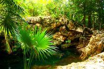 Cenote im  Dschungel von Yucatan, Mexiko by mellieha