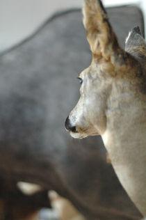 Taxidermy Deer von Rosa Mathijssen
