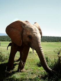 Lustiger Elephant von Eric Anders