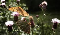 Butterflies by Marta Grzeszkiewicz