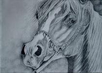 Arabian feels von silvia  ivanova