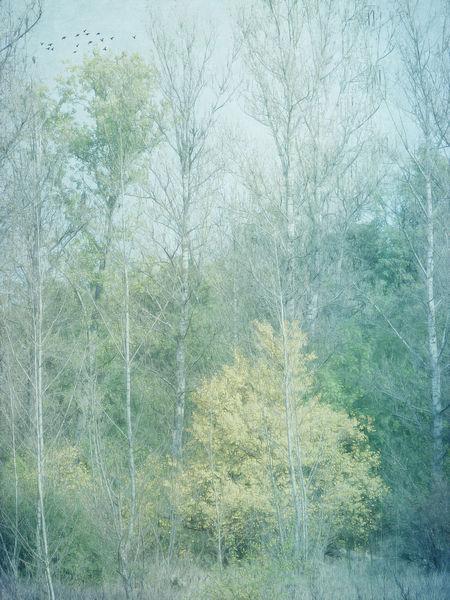 Autumn-yellow1