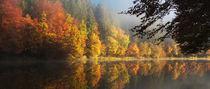oktoberlicht von Norbert Maier