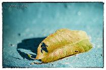 Herbst von Jordan RAW