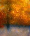 Zauberwald-06-herbstgold-jpg-large