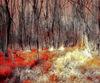 Zauberwald-08-drachenblut-jpg-large