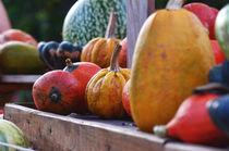 harvest by daniela scharnowski