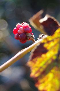 Imgp0985-autumn-heart