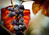 Autumn Colors  by Tiago Pinheiro