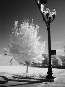 Img-107605-urban-tree
