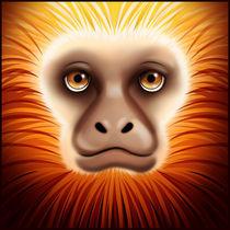 mico von Diogo Ferreira da Silva