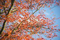 Spring leaves go Kaboom! by Stas Kalianov