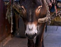 Donkey, Cargo, Morroco by Juan Carlos  Medina Gedler