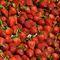 San-francisco-strawberrys