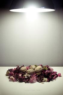Dead Nest Phase II von Francesco Rodan Fabbri