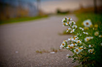 Lonely Group Of Flowers by Brandon Battey