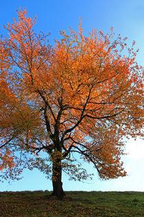 Leuchtende Blätter von Wolfgang Dufner