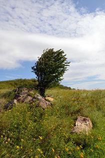 Baum auf der Weide von Thomas Brandt