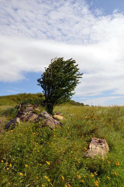 Baum-auf-der-weide-1