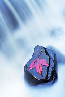 Autumn Leaf in Waterfall by Neil Overy