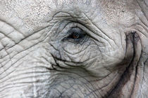 Elefantenauge von Thomas Brandt