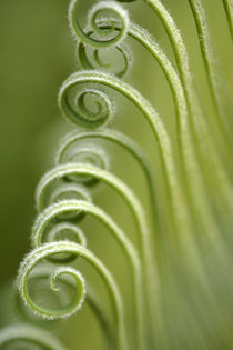 Palm Fronds Curling Open by Neil Overy