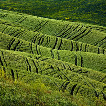 Tuscan wheat field folds by Ken Crook