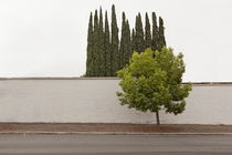 Trees-in-glendale-another-august-06-2011