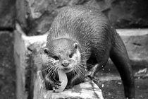 Otter von Thomas Brandt