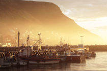 Fishing Boats at Dawn, Kalk Bay, South Africa von Neil Overy