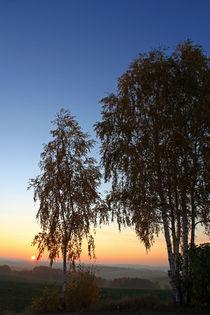 Birken im Abendrot von Wolfgang Dufner