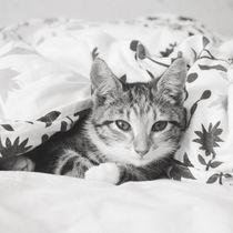 Kitten von Amanda Eriksson