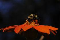 Sweet Nectar von Tom Warner