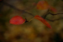 20111027-dsc-9943-autumn-texture-sig