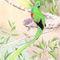 Quetzal-lapiz-color