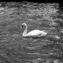White Swan by Alexandra Turica